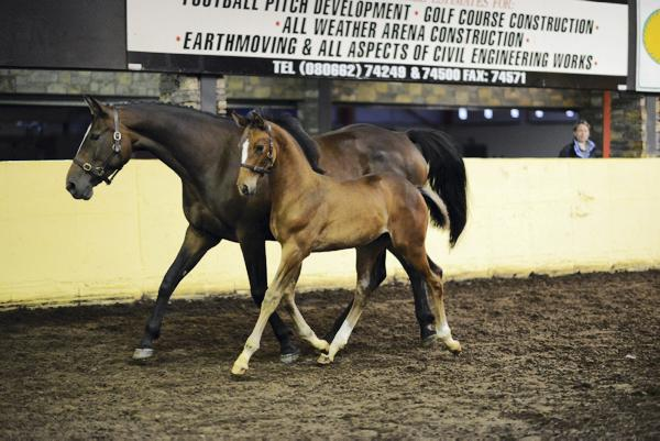 Kannan colt foal tops steady trade at €7,500