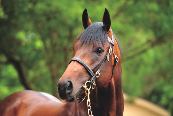 New sire Epaulette bound to attract attention