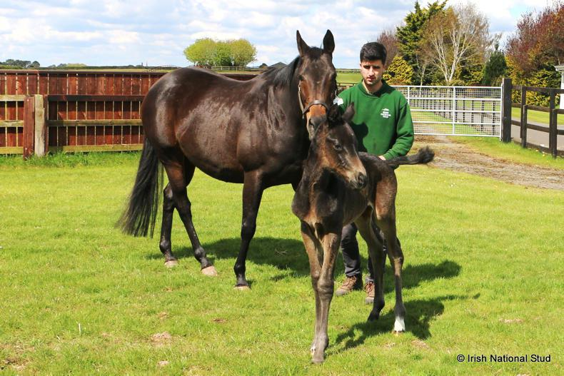 The Queen has foaled a Frankel colt