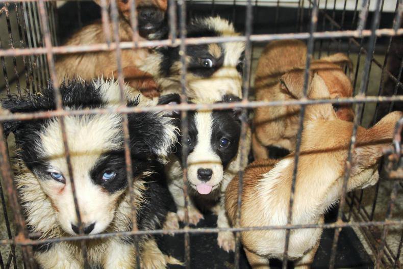 27 dogs in ISPCA care after being discovered in a van at Cairnryan ferry port