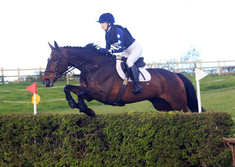 EVENTING:  Campbell the Master at local event