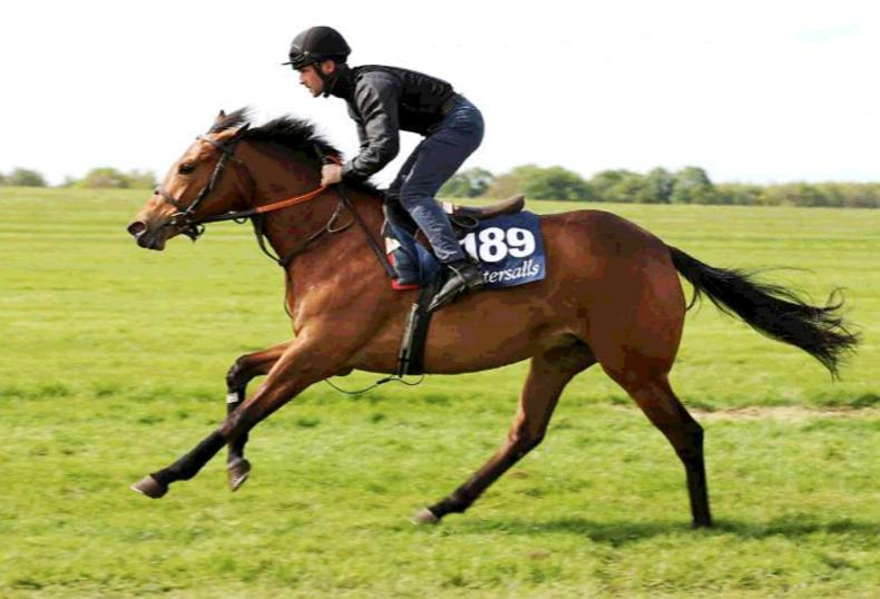VIDEO: Tamayuz filly leads the way at Tattersalls