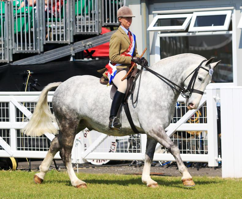 150th BALMORAL SHOW PREVIEW:   Champions back to defend titles