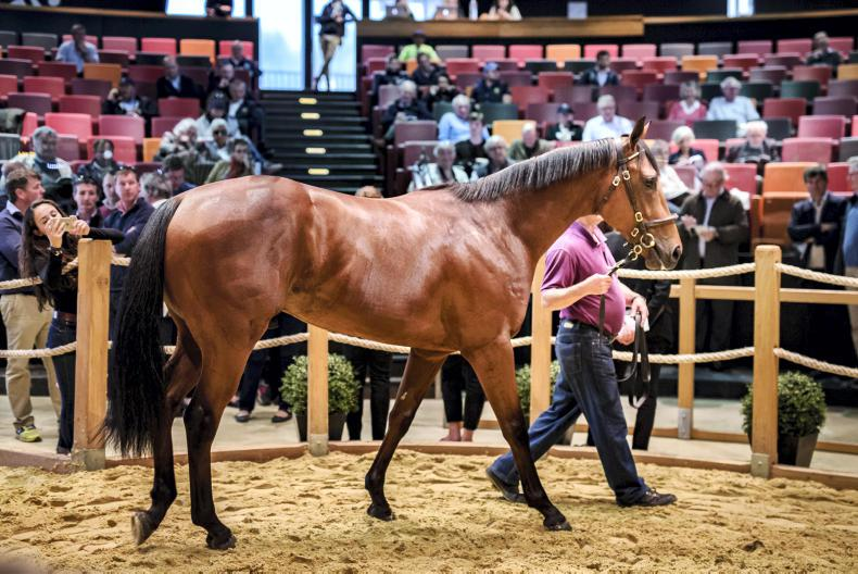 VIDEO: Coolmore snap up final Scat Daddy at Arqana