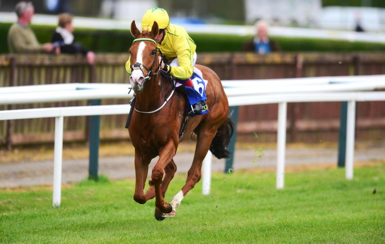 TIPPERARY MONDAY: Mm Sixsevei lights up the premier county track