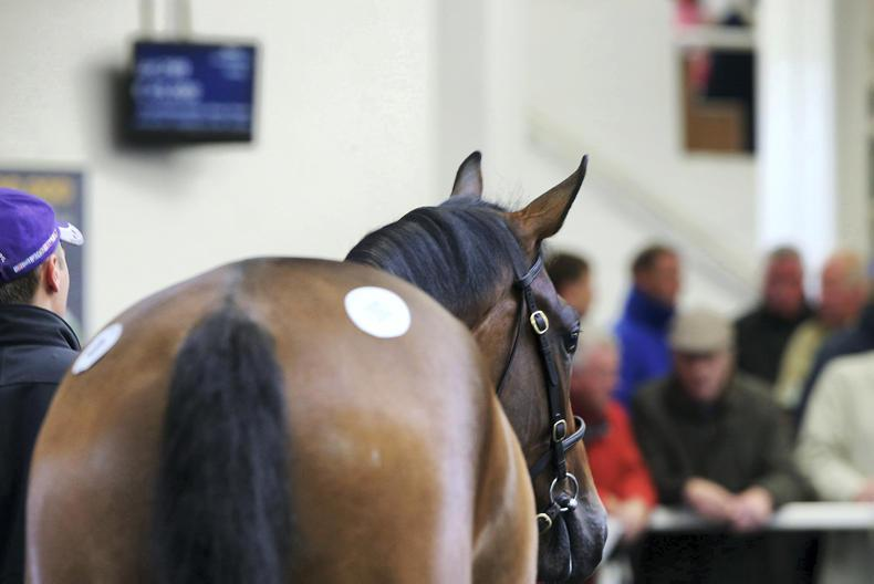 Fame And Glory proves popular at new Tattersalls Ireland Store Sale