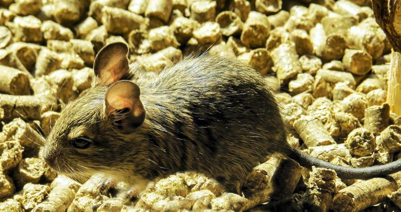 SPRING CLEANING: The feed room - prevent a winter rodent infestation