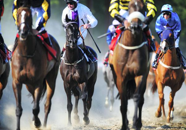 Guineas picture clears
