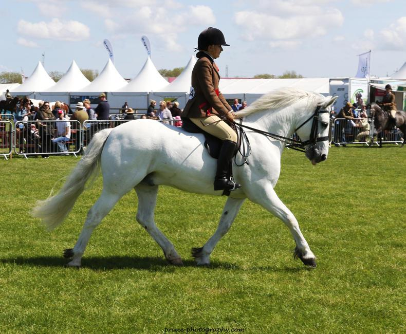 BALMORAL SHOW 2018:  Monaghanstown Rory crowned champion