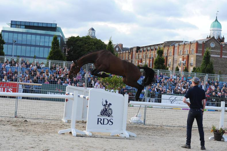 DUBLIN HORSE SHOW:  RDS data reveals significance of popular loose jumping class