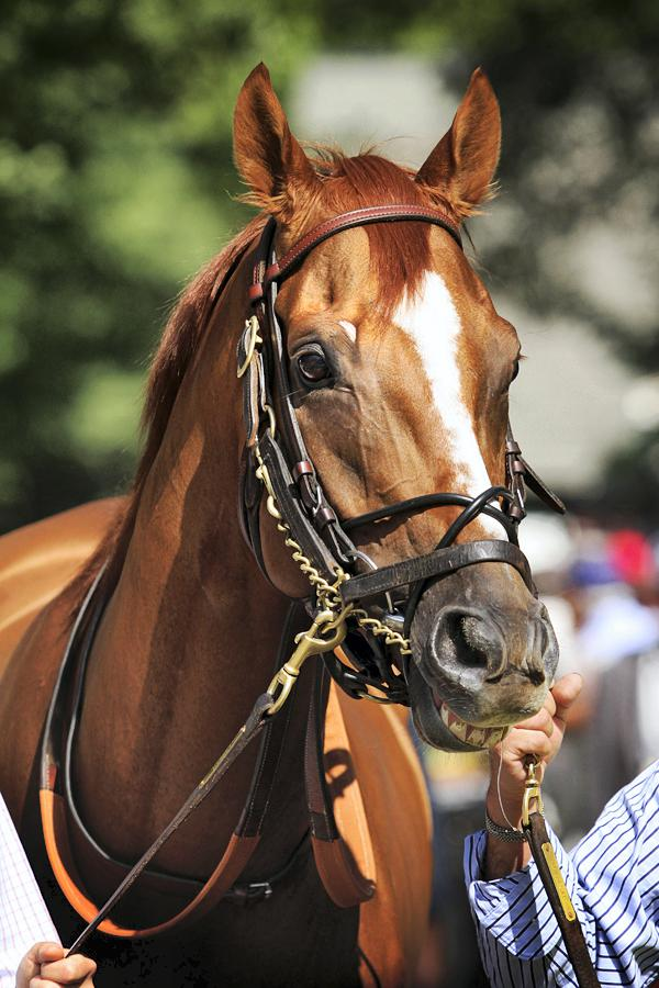 Wise Dan for Shadwell success