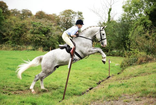 HSI to develop hunting horse register