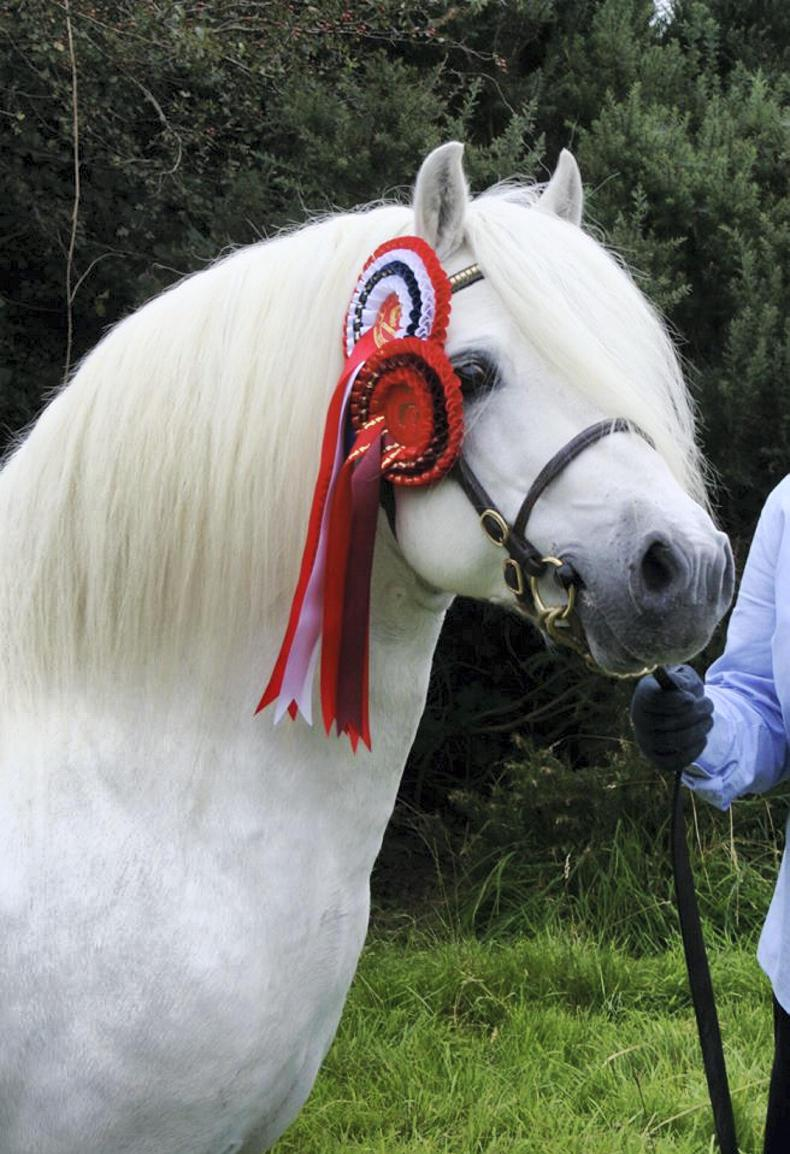 AROUND THE COUNTRY:  Innovations abound at All Welsh show