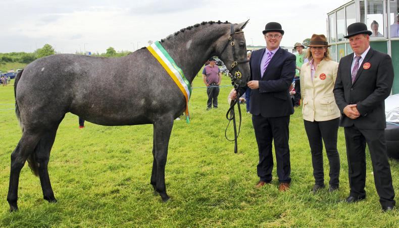 AROUND THE COUNTRY:  Barnaview Misty River takes the crown