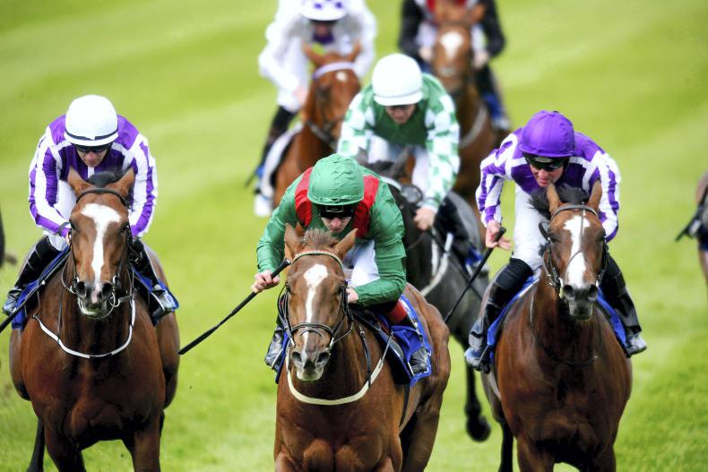 DONN McCLEAN: Why you should oppose Saxon Warrior in the Derby