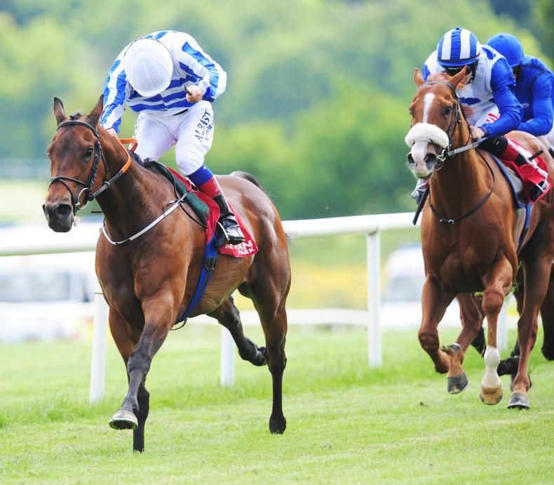 GOWRAN PARK MONDAY: O'Brien has the winning Spirit