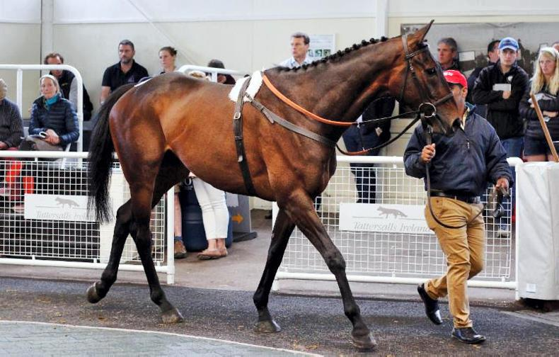 Son of Presenting tops Tattersalls Ascot June Sale