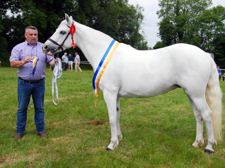 AROUND THE COUNTRY:  Powerful bloodlines at Ballinalee