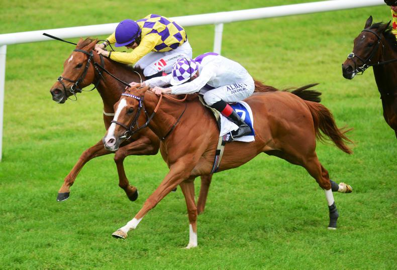 ROSCOMMON MONDAY: Bolger breeding double
