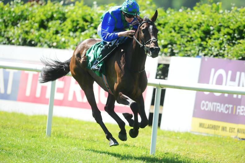 LIMERICK SATURDAY:  Pedisnap can come home the winner again
