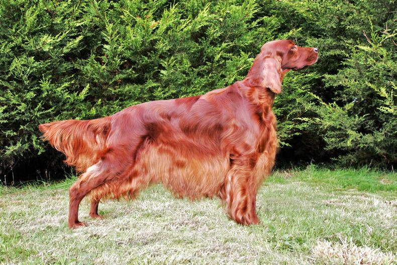 DOG FEATURE: Specific breeding is for a lot more than just looks