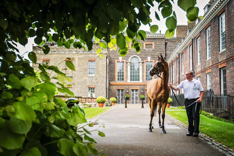 Mares top the trade, but huge result for Marnanes at Goffs London Sale