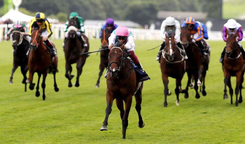 ROYAL ASCOT TUESDAY: Calyx emerges as major talent