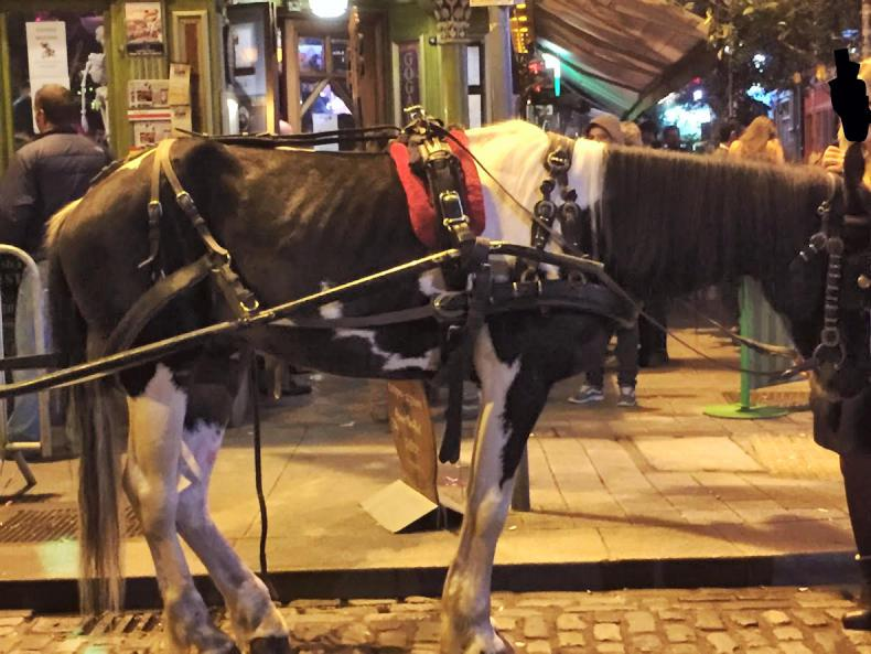 NEWS:   MLHR  in carriage driving lobby