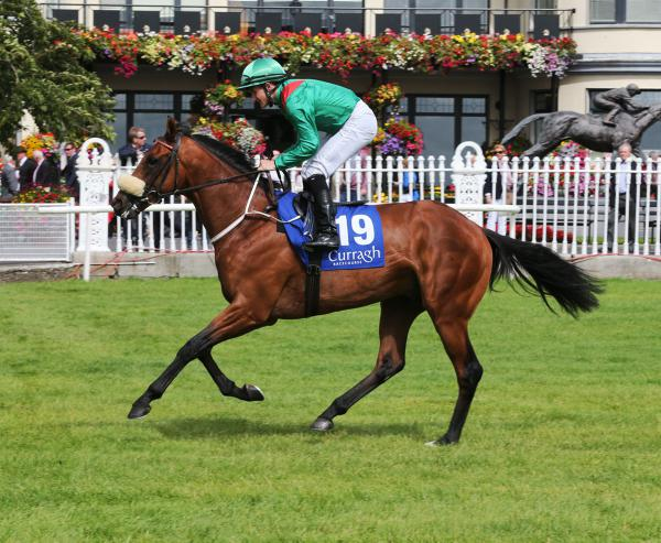 HORSES TO FOLLOW: Irish runners for the week ahead