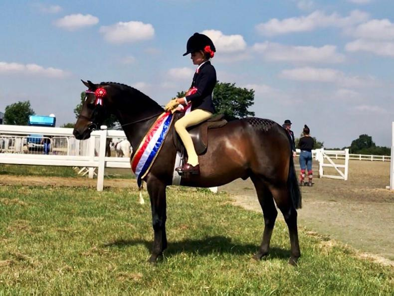 PONY TALES:  Another championship for Ravaro Mr Tod