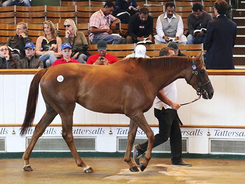 Daughters of Dubawi and Galileo light up Tattersalls July Sale