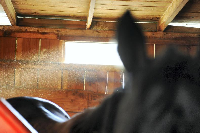 HORSE SENSE: Reducing racehorse injuries