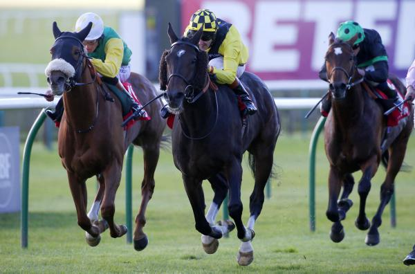 Easy does it for Cesarewitch win