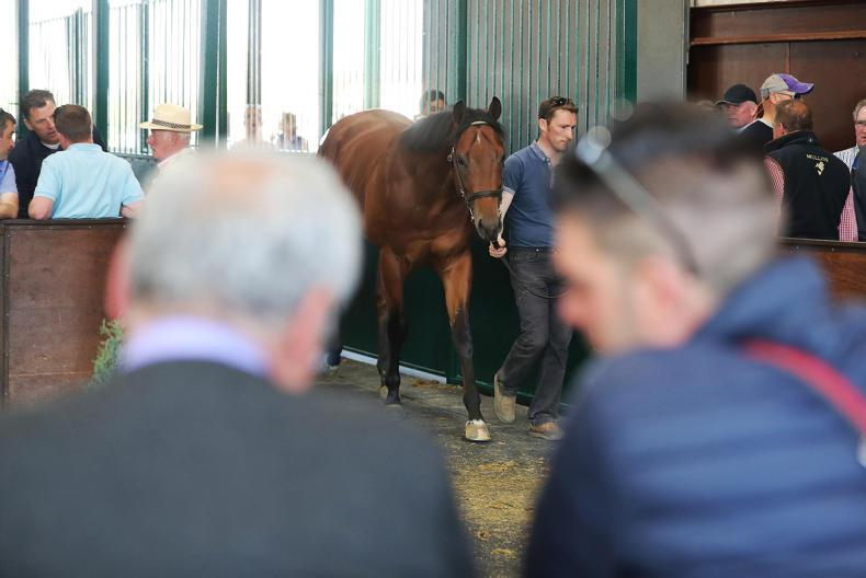 Dubawi filly for sale in Goresbridge