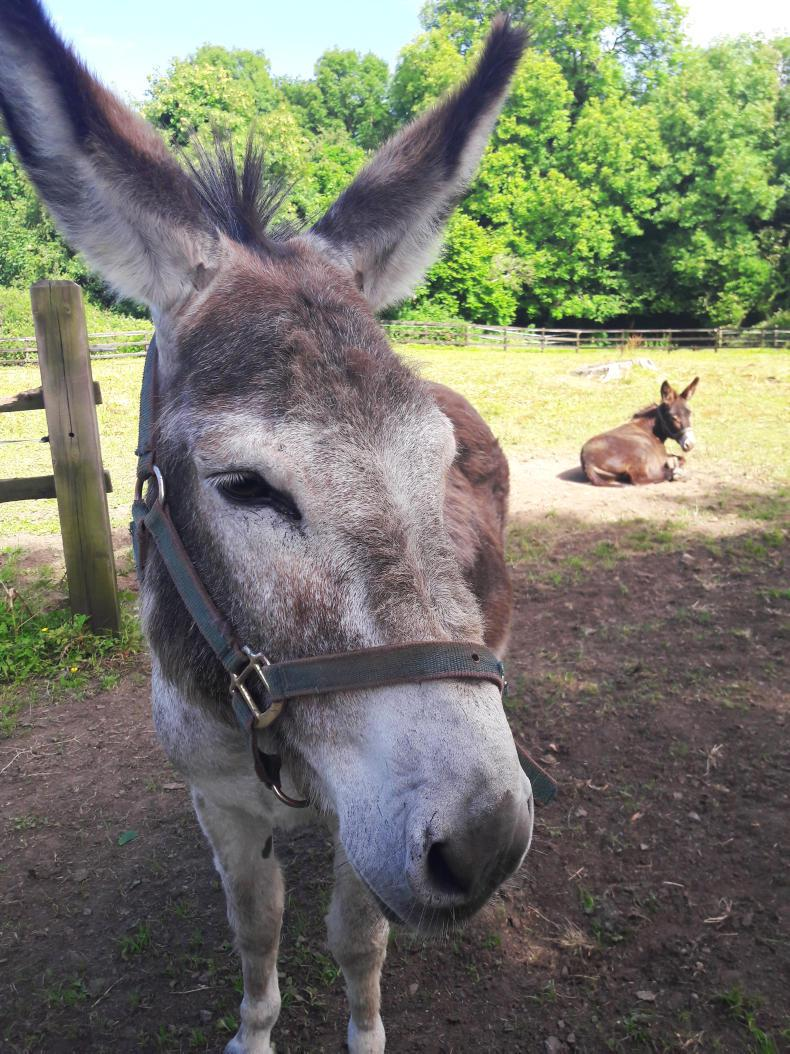 NEWS:  ISPCA rescues donkeys from bog