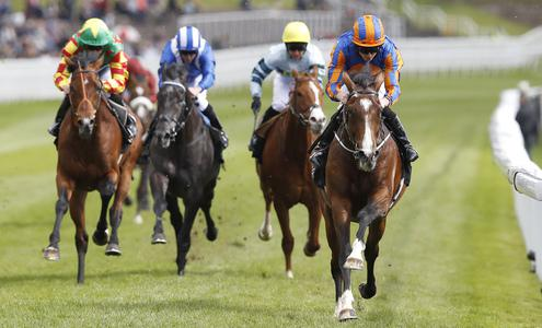 Goodwood Cup nominated as the target for Idaho