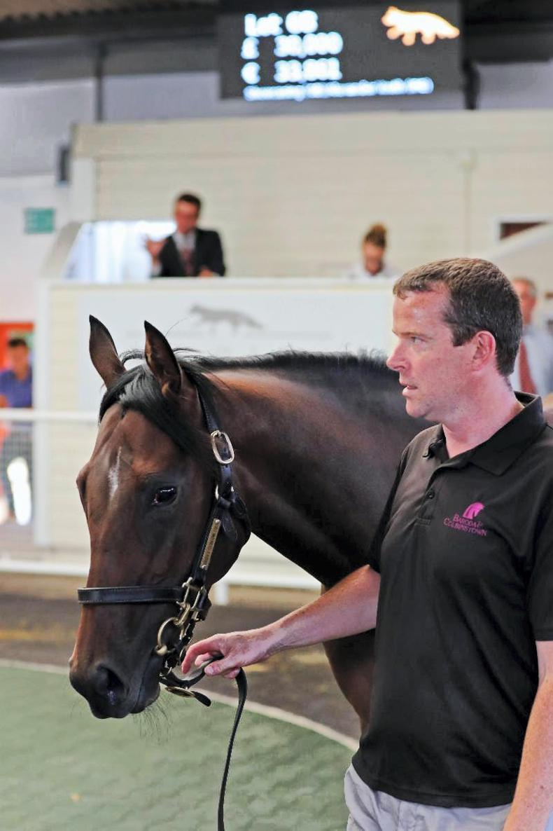 Showcasing filly leads the way at Tattersalls Ireland Ascot July Sale