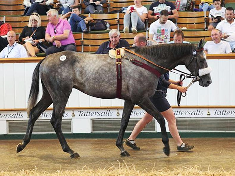 TATTERSALLS JULY SALE: Lethal Steps heads back to Ireland