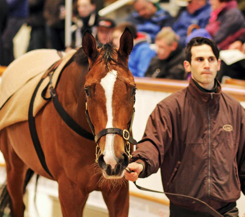 BREEDING INSIGHTS: Quorto starts Dubawi's second century