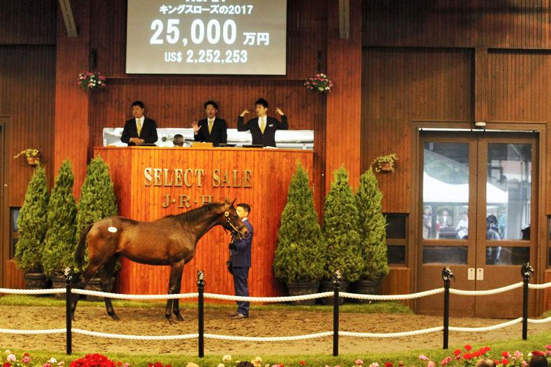 JAPAN: Gains across the board in session one of the JRHA Select Sale