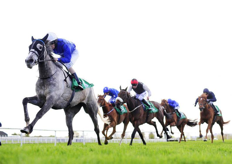 PEDIGREE ANALYSIS: First crop of Dawn Approach and Havana Gold catching the eye