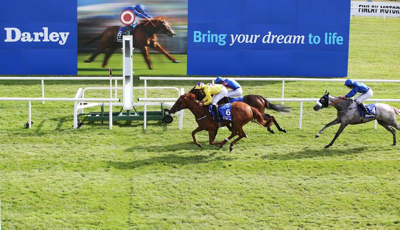 BREEDING INSIGHTS: Classic Class from Holy Moon
