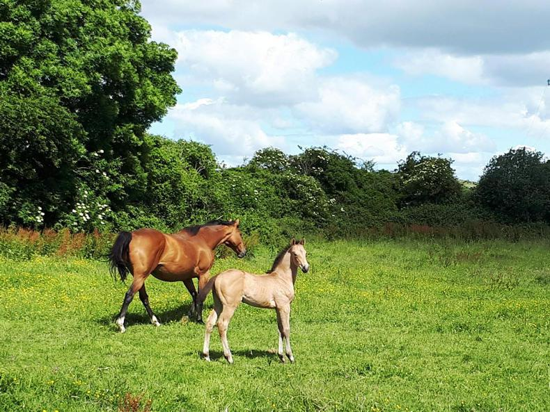 NEWS:  This foal has big boots to fill!