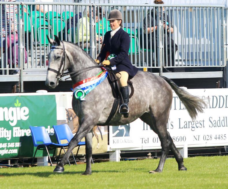 DUBLIN HORSE SHOW 2018: Bloomfield horses primed for Dublin