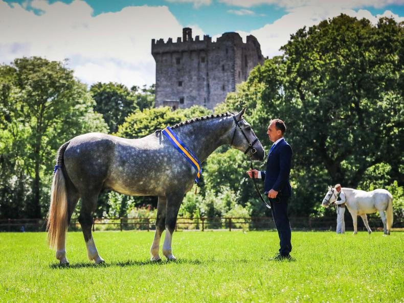 AROUND THE COUNTRY:  Archie The Great reigns at Blarney Castle