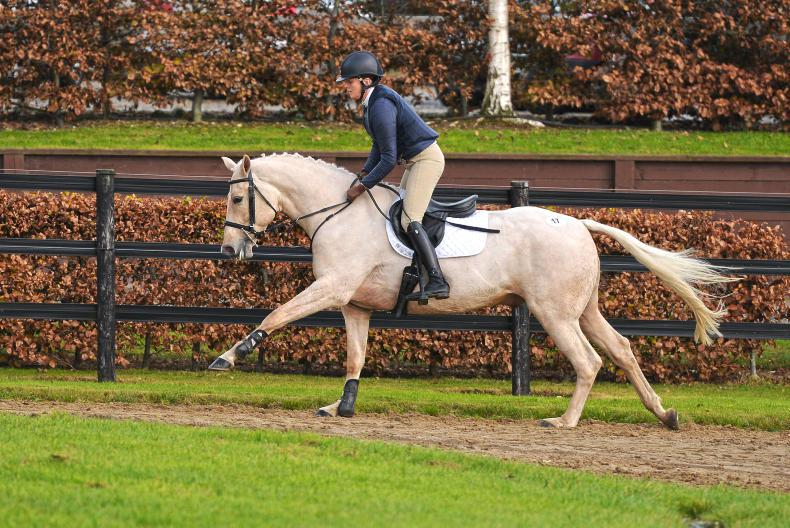 DUBLIN HORSE SHOW 2018:   Sam Salad takes on the RDS challenge