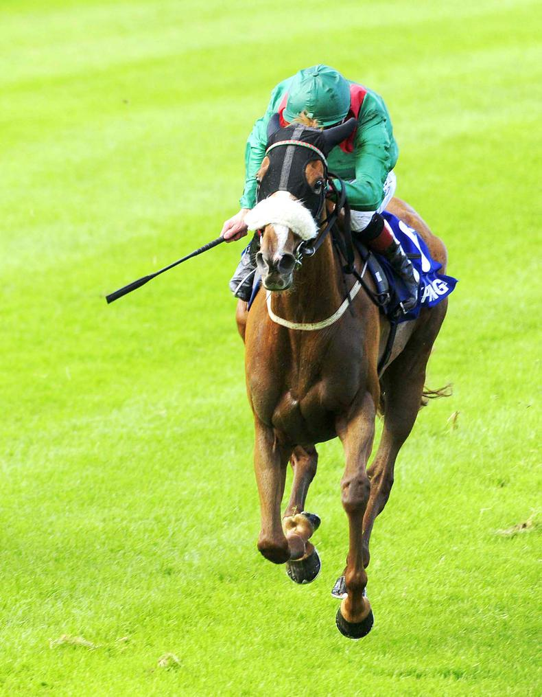 PEDIGREE ANALYSIS: Blacktype multiples for Teofilo, Dark Angel and Frankel