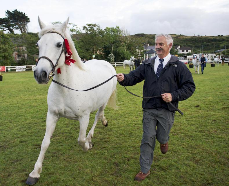 NEWS: Clifden gears up for week long Connemara Pony Festival