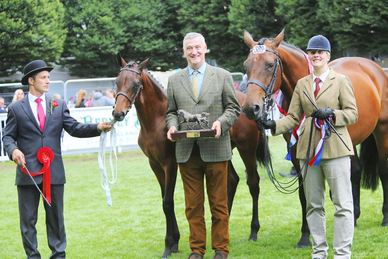 NEWS:  Hallowberry Destiny shines at the RDS
