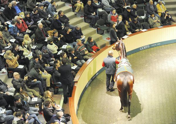 Six Frankel foals in Goffs November Sale catalogue